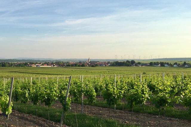 Landschaftsbild Gundheim in Weinbergen im Wonnegau